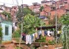 Dengue Zika Virus Strands